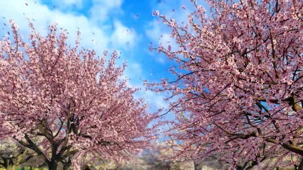Detailní záběr svěží kvetoucí japonské sakura třešně a růžové květy okvětních lístků padající ve zpomaleném filmu na pozadí jasně modré oblohy. Dekorativní jarní sezóna 3D animace vykreslená ve 4k