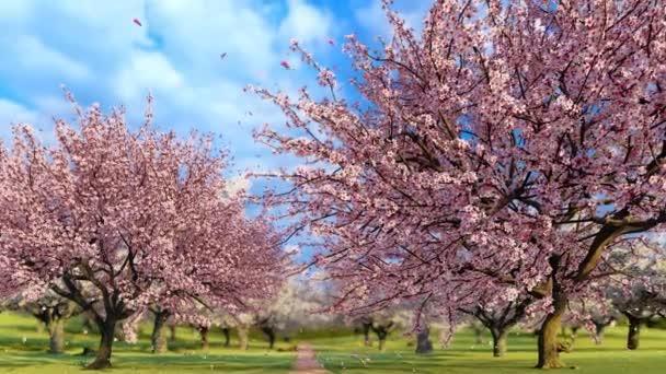 Japonské sakura třešně v plném květu a růžové okvětní lístky padají ve zpomaleném filmu za slunečného jarního dne. Dekorativní jarní sezóna 3D animace vykreslená ve 4k