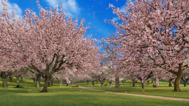 Japanese garden with lush blooming sakura cherry trees in full blossom and flower petals falling in slow motion on green grass at sunny spring day. Springtime season 3D animation rendered in 4K