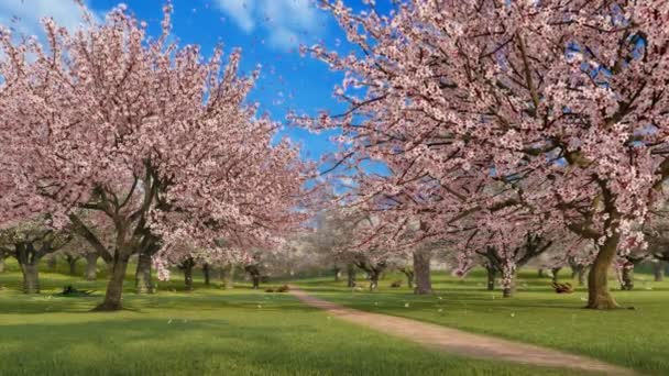 Empty japanese garden with blooming sakura cherry trees in full blossom and flower petals falling in slow motion on fresh green grass at spring day. Springtime season 3D animation rendered in 4K