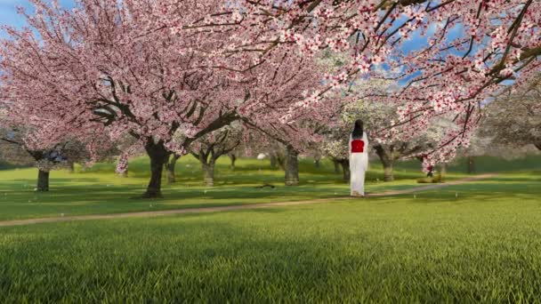 One asian woman in traditional japanese kimono among lush blooming sakura cherry trees in full blossom and pink flower petals falling in slow motion. Springtime season 3D animation rendered in 4K
