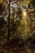 podzimní les se stromy