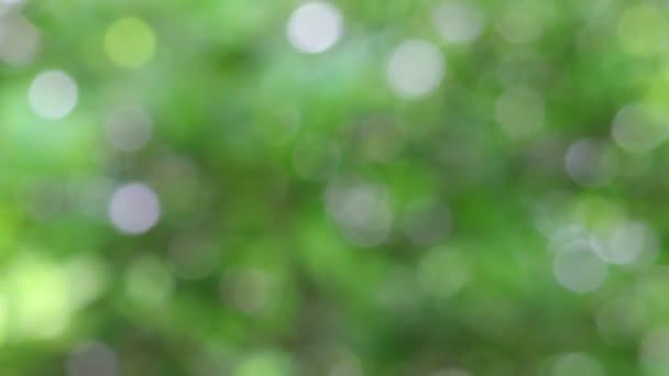 detailní záběr citrónových listů (zelené prostředí) a rozmazaný efekt příroda pozadí