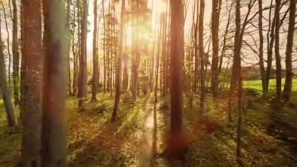 lesní stromy. lesy. Stromy. rostliny příroda pozadí. v létě. letecký pohled.