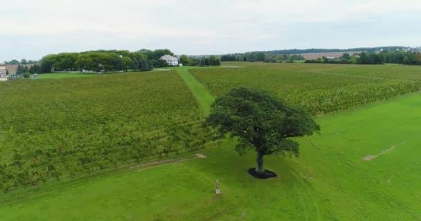 Krásný Dron Shot of Vineyard, Letecký Drone Vines Vinařství