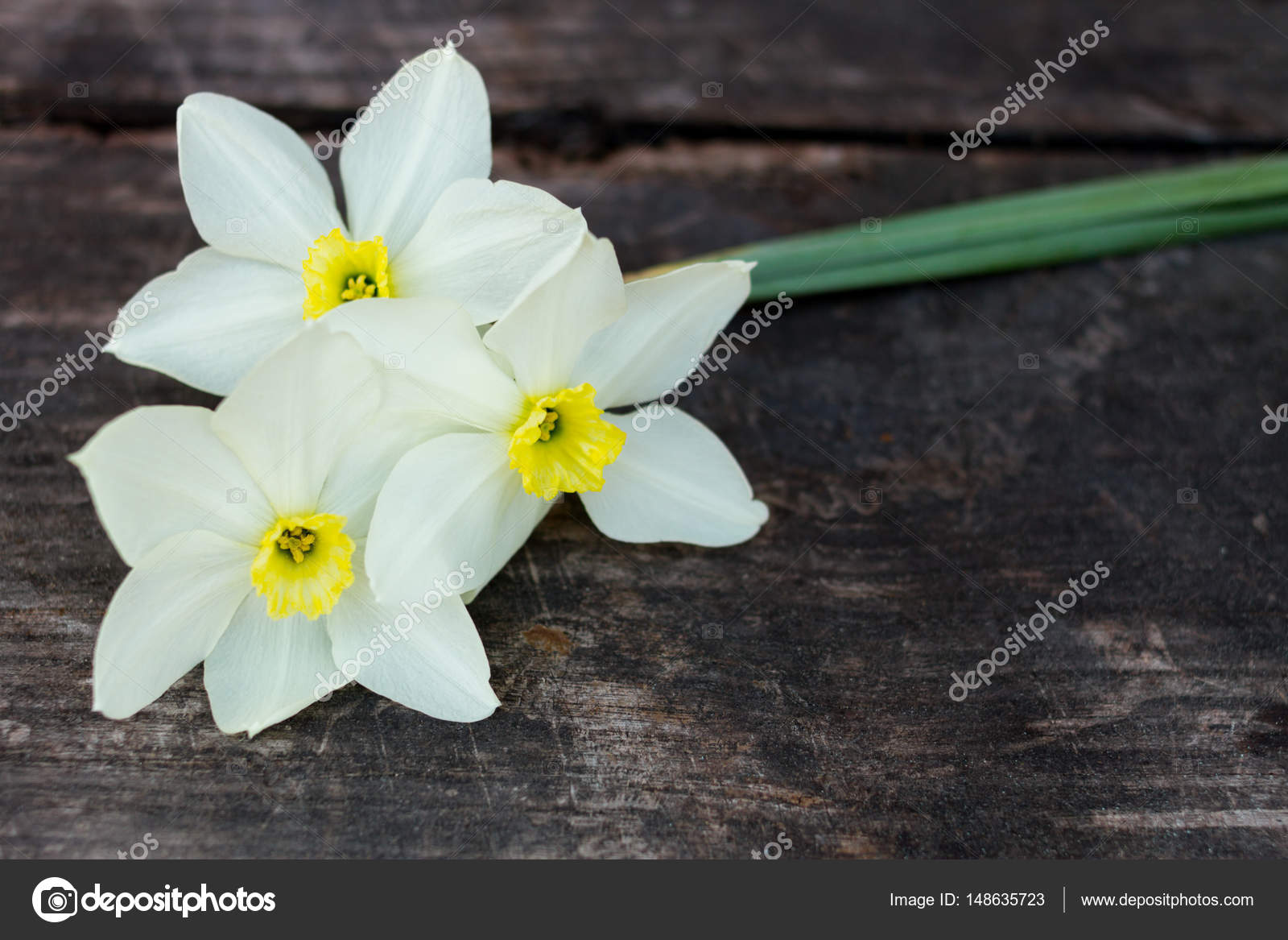Light Yellow Daffodil Flowers On Dark Wood Stock Photo Ctvvelve