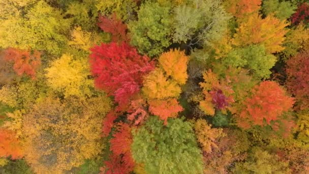 Beautiful fall shot over a forest filled with thick colourful trees