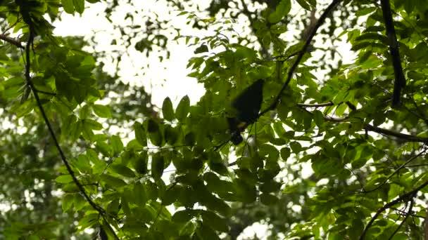 Strava papoušek krmení z kůry stromu při řezání malé větve