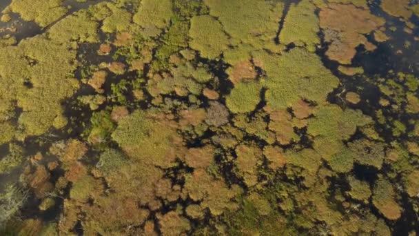 Kruhové skvrny trávy vytvářejí tvar přírodní bažiny pozorované dronem