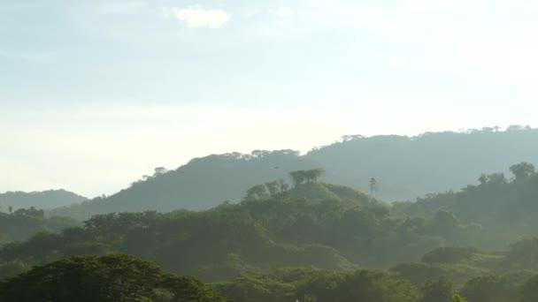 drei Paare scharlachrote Papageienvögel fliegen in Costa Rica