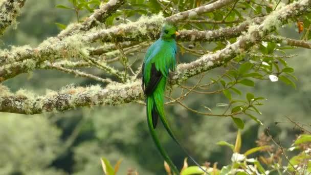 Ohromující mystické Quetzal pták v detailu a střední střely v divočině