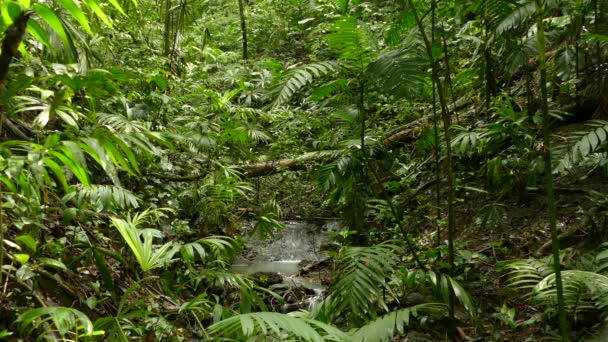 eine Minute friedliche Sequenz des Stroms, der im Dschungel leicht kaskadiert