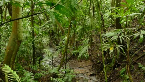 kleiner Wasserlauf auf dem Dschungel-Boden des üppigen dichten Regenwaldes