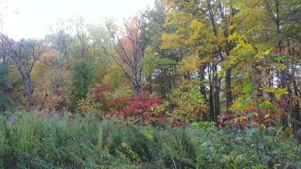 Beautiful autumn colors showed from broadleaf trees in Canadian forest