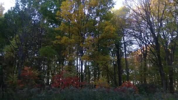 Colorful natural forest setting at dawn filmed on smoothly gliding camera