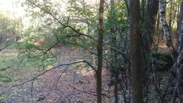 Slow steady glidecam shot of forest in the fall with sun shining thru
