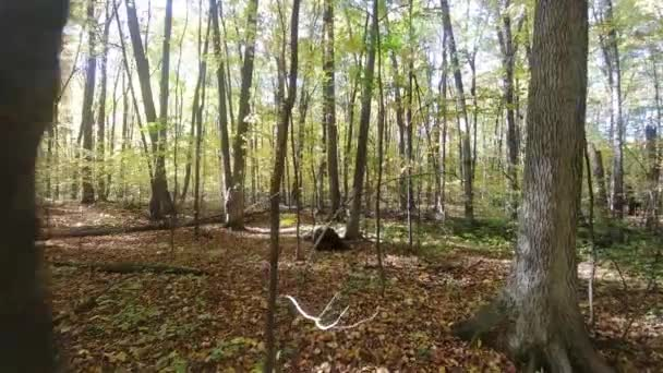 Gimbal walk in brightly lit forest in the fall with dead leaves on the ground