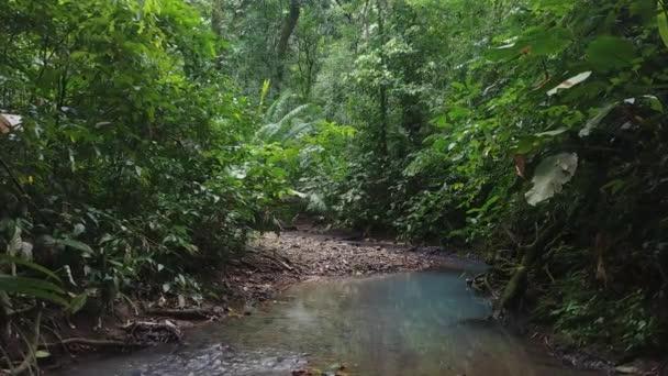 Steadicam pohybující se podél říčního koryta v husté divoké džungli