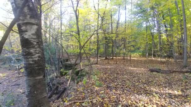 Gimbal camera smoothly moving along plateau in the fall with small cliff