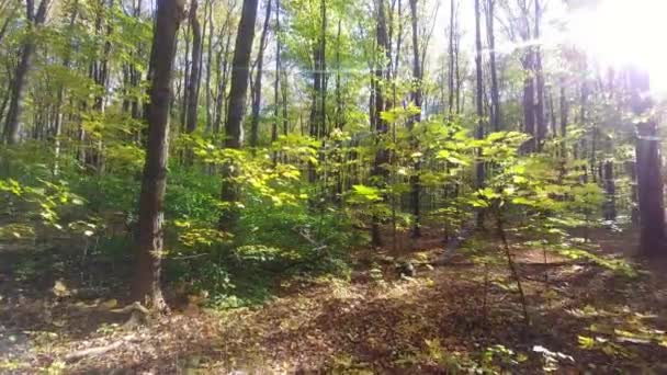 Sun shining through camera lense while moving forward in forest in the fall
