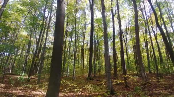 Beautiful forest in the fall filmed on gyro mounted camera going sideways
