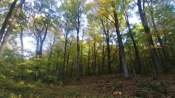 Walk within forest in the fall in Canada conservation natural reserve