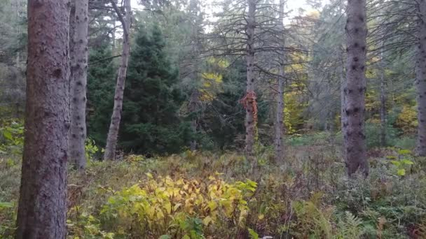 Slow walk within tall grassy field in the fall in mixed Canadian forest