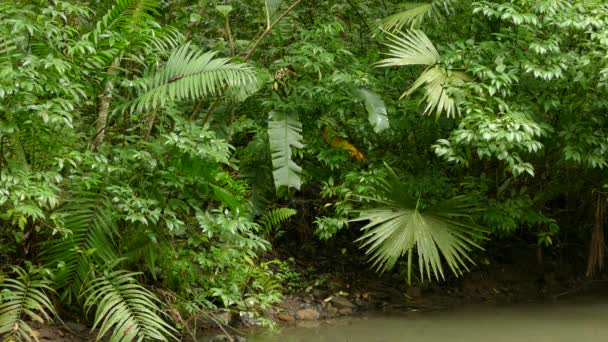 Beautiful lush pond in the jungle with red bird moving within bush
