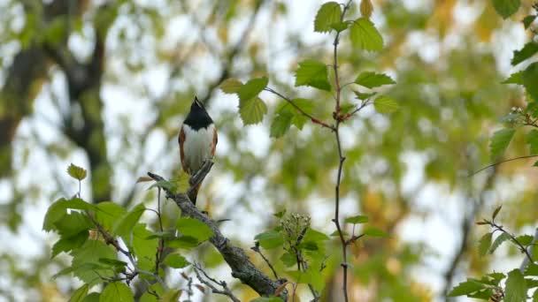 gyönyörű madár a természetes háttér