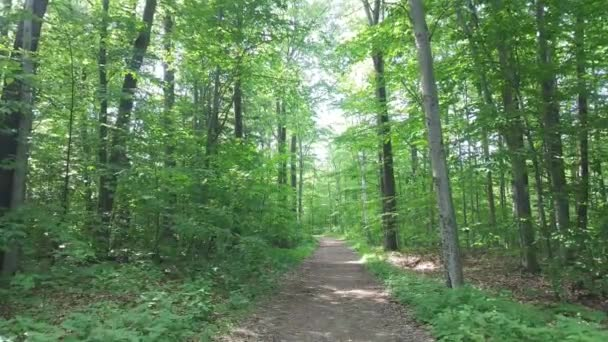 Trail walk in bright broadleaf deciduous forest on well-maintained trail