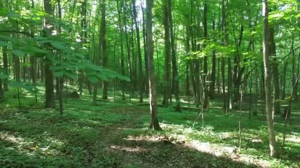 Erdő egy dombon otthont ad a nagy lomblevelű fák nőnek a nap