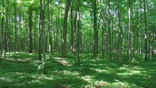 Smooth gliding shot of heavenly forest composed of broadleaf trees