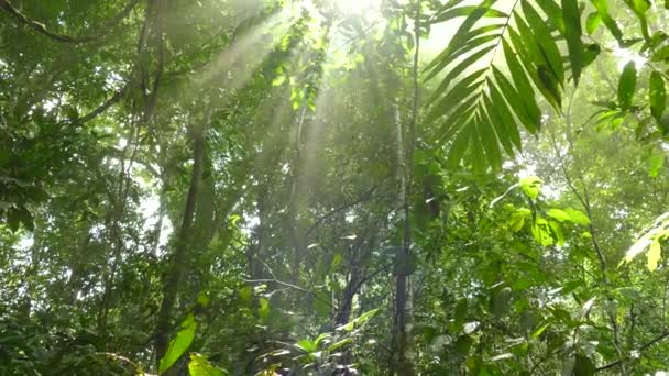 Dreamy view of sun shinning its rays through dense jungle vegetation