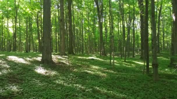 Pure wild landscape of a deciduous forest in North America in summer