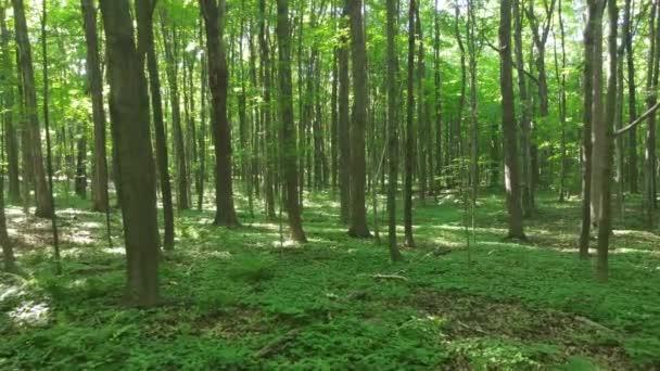 Walking forward through beautiful dense green Canadian forest
