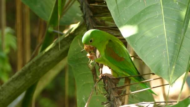 Oranžový papoušek vzlétne z palmy po obědě