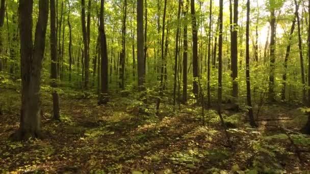 Mírumilovný a přirozený les v Kanadě viděný dronem letícím skrz něj