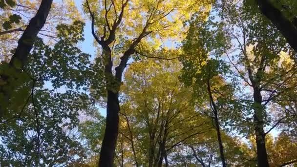 A nagy és magas fák ősszel, tél előtt színessé válnak.