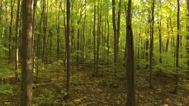 Krásný les na podzim, který dron letí pomalu dopředu a dolů