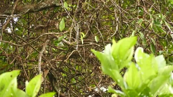 Široký pohled na strom s rychlým černobílým bubeníkem hopping