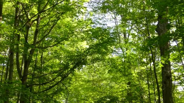 Velký zralý strom rostoucí v listnatém lese v létě s několika drobnými ptáčky
