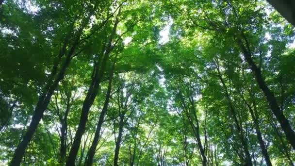 Gliding camera shows beautiful pure forest canopy with lit trees