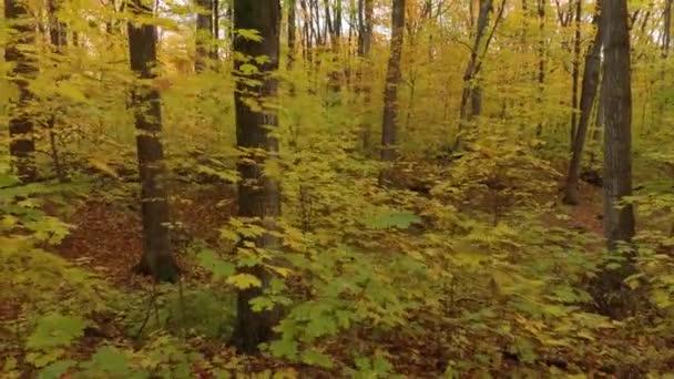 Drohne Luftaufnahmen von Laubwald im Herbst mit vielen Farben