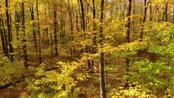 Wind blowing in leaves sometimes falling off of trees in fall viewed by drone