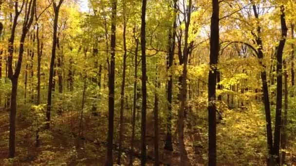 A fatörzsek és ágak lesznek az utolsó megmaradt látnivalók, miután levelek hullanak az erdőben.