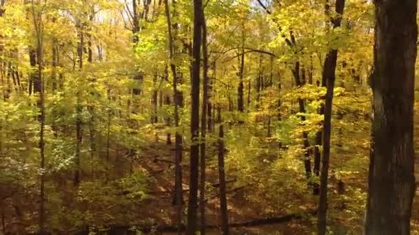 Dron letící bokem v lese na podzim se zralými listnatými stromy