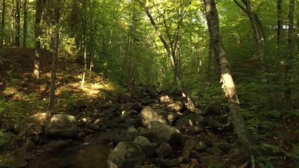 A nap áthatol a zöld leveleken, amit a drón filmez előre és megállít.