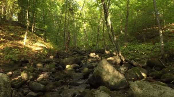 Jedna minutová posloupnost dronů velmi pomalu stoupá nad pěknou kaskádu v lese