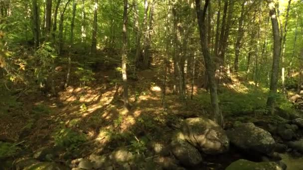 Dron stoupá v hustě zalesněných lesích v Kanadě během léta
