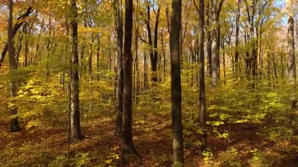 Bird taking off from tree trunk before flying away filmed by drone moving in forest